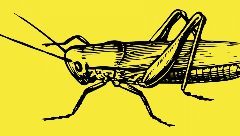 Will we really eat insects in the future?